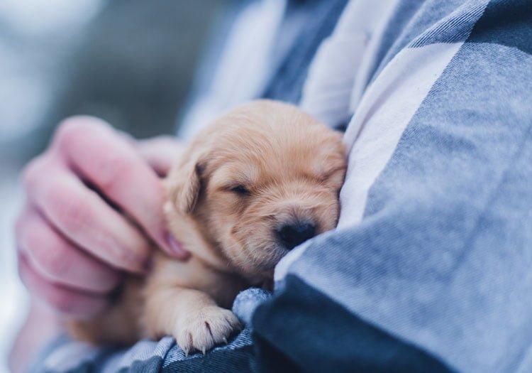 yavru köpek eğitimi zamanı