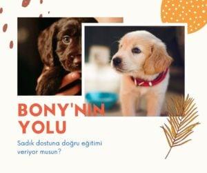 bonynin yolu köpek eğitim kitabı